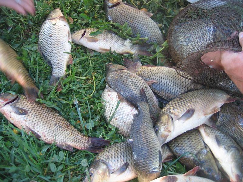 рыбалка в рыбаках раменский район